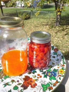 Candy corn vodka hanging with crabapple liqueur. Come back in a few weeks for the liqueur unveil